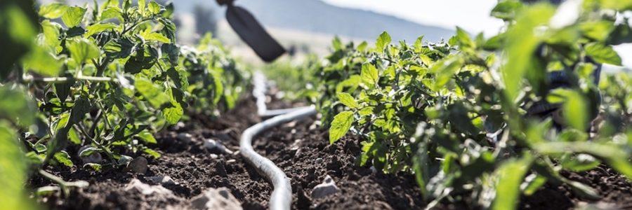 """Il raggruppamento di cui fa parte la SUD – Solo Uguali Diritti é tra i vincitori di """"Coltiviamo Agricoltura Sociale Edizione 2017"""""""